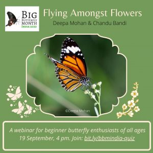 Butterfly month quiz and webinar
