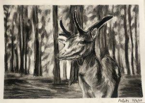 Deer Shading Art with Sara by Aditi UK Bookosmia