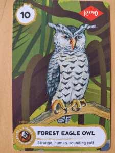 forest eagle owl write ups by kids Bookosmia