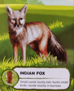 indian fox facts for kids Nature with Sara Bookosmia