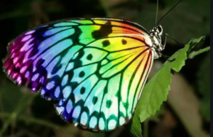 Nature with Sara rainbow butterfly Bookosmia