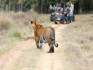 kanha tiger reserve place review by kids with Sara Bookosmia