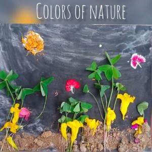 Nature drawings - The magic of imagination