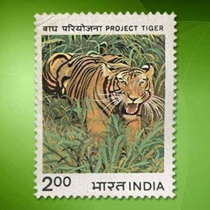 Save tigers - Teach kids about tigers, not angels